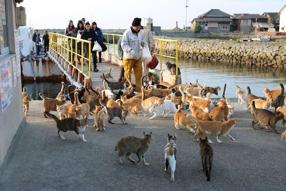 Die Bewohner sind verzweifelt. Wer vergiftet denn nur die Katzen?