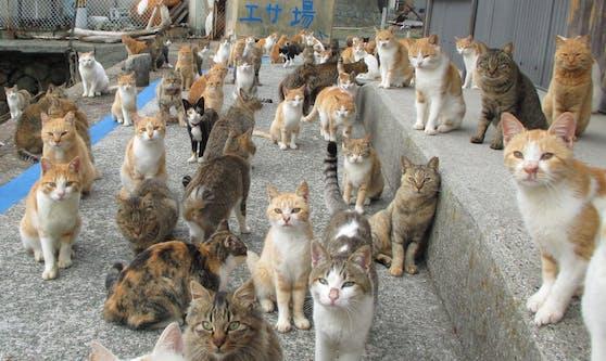 """Ist die """"Katzeninsel"""" Umashima bald doch kein El-Dorado mehr für Stubentiger?"""