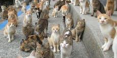 Warum sterben plötzlich alle auf der Katzeninsel?