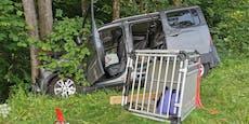 Frau mit Hunden verunfallt – Auto wählte selbst Notruf
