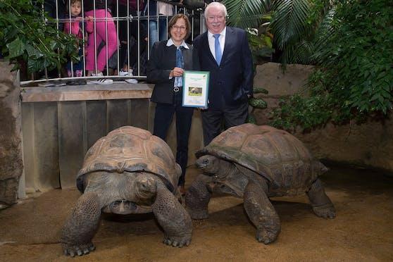 Alt-Bürgermeister Michael Häupl (hier mit Ex-Zoo-Direktorin Dagmar Schratter) war Pate der Rieschenschildkröte 'Schurli' im Tiergarten Schönbrunn
