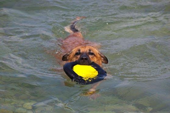 Wir verraten euch die hundefreundlichsten Strände Kroatiens.
