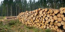 82-Jähriger stirbt bei bizarrem Wald-Unfall