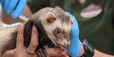 Zoo impft seine Tiere jetzt gegen Corona