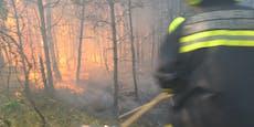 Video zeigt Waldbrand-Inferno aus nächster Nähe