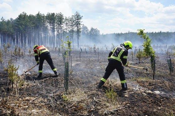 Waldbrand im Föhrenwald im Bezirk Neunkirchen
