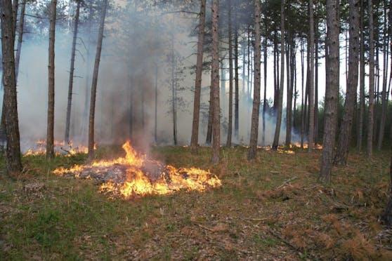 Waldbrand im Föhrenwald, Bezirk Neunkirchen (NÖ)