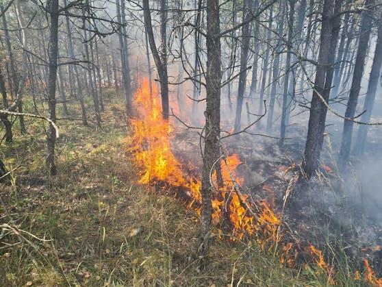 Ein Wald im Bezirk Neunkirchen ging in Flammen auf.