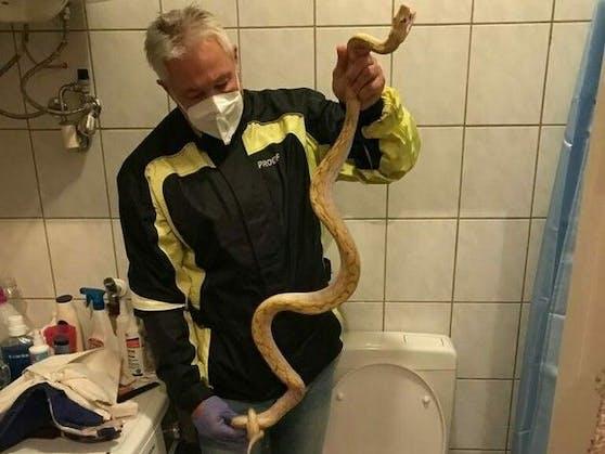 Wie würdest du reagieren, wenn du diese Schlange im Klo siehst?