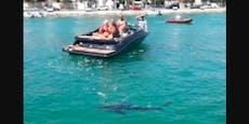 Hai kommt Bade-Urlaubern in Kroatien gefährlich nahe