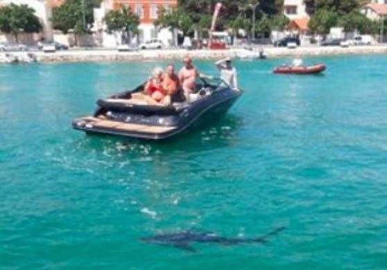 Ein Blauhai wurde am Wochenende in der Nähe von Šibenik gesichtet.