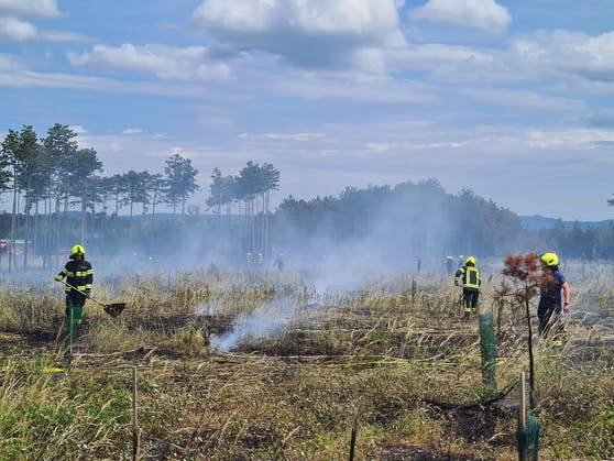 Brand im Föhrenwald im Bezirk Neunkirchen