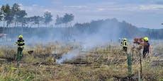 Großeinsatz! Föhrenwald steht erneut in Flammen