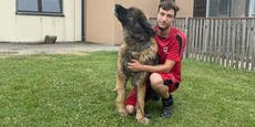 Tierarzt zeigt nach Tod von Hund eigenes Tierheim an