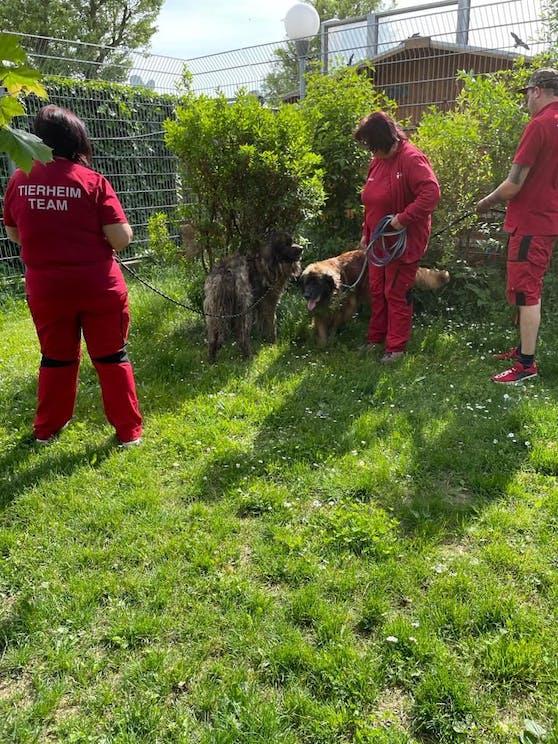 Die geretteten Hunde