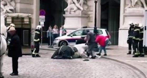 Ein TikTok-Video hält den Moment fest, in dem ein Pferd in Wien kollabiert.