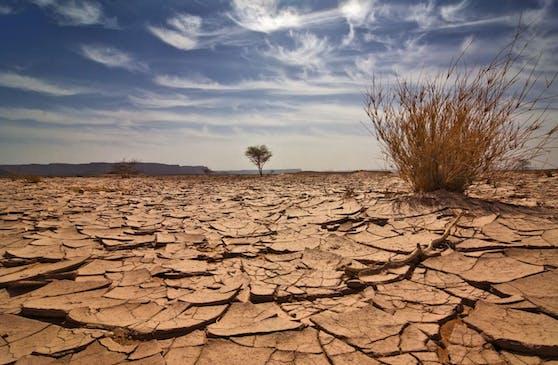 Wüstenähnliche Landschaften könnten sich verbreiten, wenn die Temperaturen weiterhin steigen.