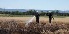 Waldbrände halten Feuerwehren in NÖ auf Trab
