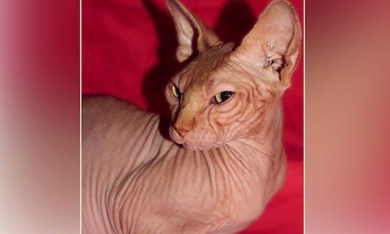 """So sah """"Jasper"""" zum Zeitpunkt seiner Adoption 2009 aus."""
