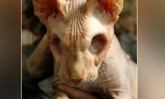 """""""Jasper oder Jazzy"""" bekam mehrere starke Infektionen, die ihm beide Augen kosteten."""