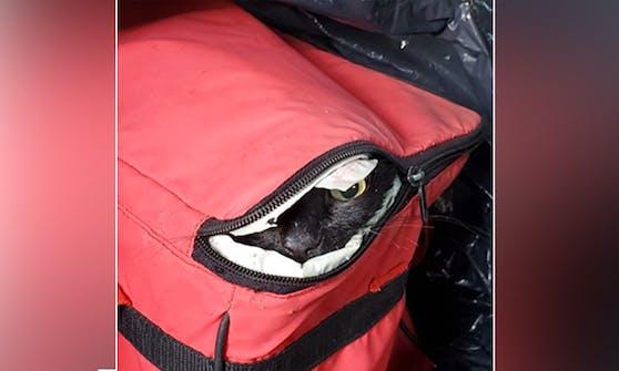 """Die kleine, schwarze Katze """"Juliane"""" hätte nicht viel länger in der Kühlbox überlebt."""