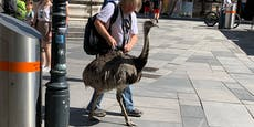 Mann geht mit Nandu durch Wiener City spazieren