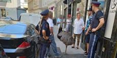 Wiener Polizei führt Nandu mit Herrl in der City ab