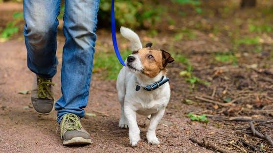 Für einen Mann aus Sydney wurde ausgerechnet bei einem Spaziergang mit seinem Hund der Traum vom Millionär sein Realität.