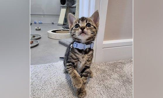 Der kleine Toulouse wurde ohne Anus geboren. Nur durch eine bahnbrechende Operation darf er leben.