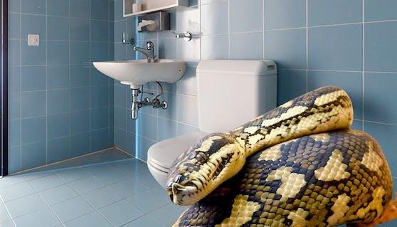 Fälle von Schlangen im WC häufen sich derzeit in Österreich.