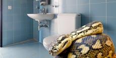 Schlangen in Toiletten – kann das bei mir passieren?