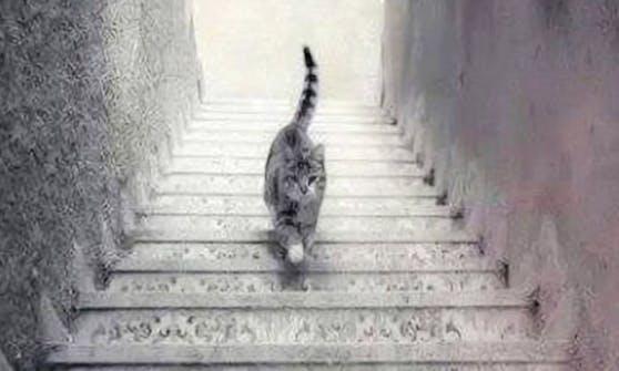 Gefinkelt! Läuft die Katze eine Treppe hinauf, oder hinunter??